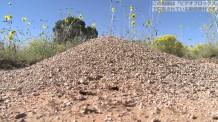 【動画素材】蟻の巣のハイビジョン映像